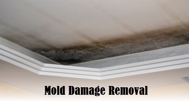 mold removal and restoration services